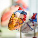 ذرات بزرگ «کلسترول خوب» میتوانند ریسک بیماری قلبی را افزایش دهند