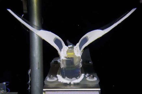 این ربات سیلیکونی فشار خردکننده عمق اقیانوس را تحمل میکند [تماشا کنید]
