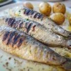 مصرف این ماهیها میتواند مزایای بزرگی برای مبتلایان به بیماری قلبی داشته باشد