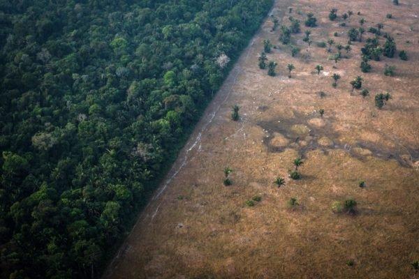 هشدار محققان: جنگل آمازون احتمالا خود به عامل گرمایش زمین تبدیل شده است
