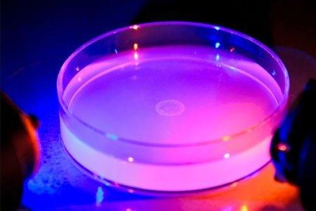 نتیجه عجیب تحقیق دانشگاه ییل: کرمها میتوانند رنگ را بدون چشم ببینند