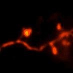تصویربرداری سهبعدی از ساختارهای مغز موش زنده با تکنیک جدید