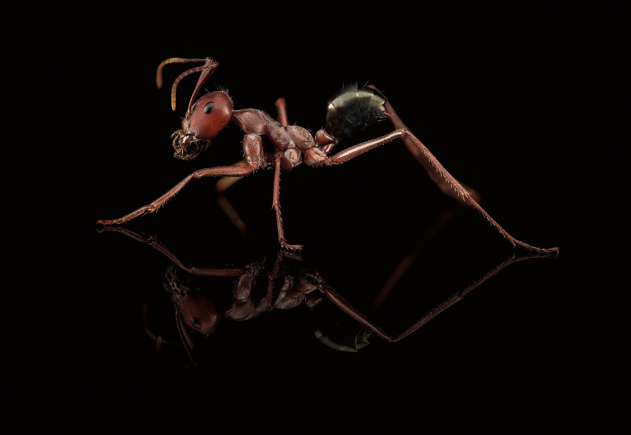 دنیای شگفتانگیز مورچهها؛ اولین معماران و کشاورزان زمین