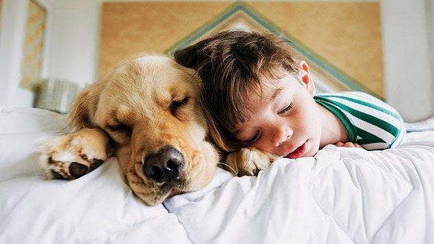 پژوهشگران: همراهی با حیوانات میتواند به بهبود کیفیت خواب کودکان کمک کند