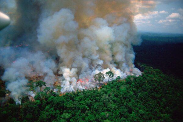 جنگلهای آمازون در یک دهه اخیر بیش از جذب دیاکسید کربن، آن را منتشر کردهاند