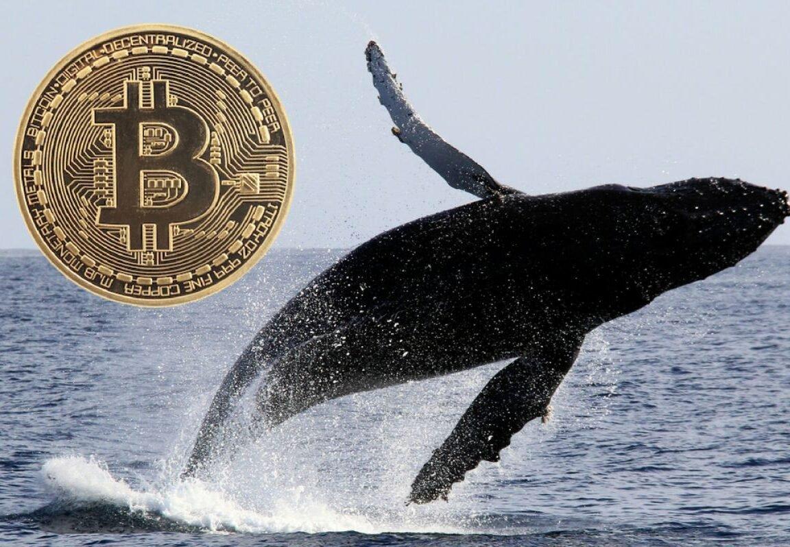 نهنگ دوران ساتوشی بعد از ۹ سال بیدار شد؛ انتقال ۷۹۱ بیت کوین به ارزش ۲۶ میلیون دلار