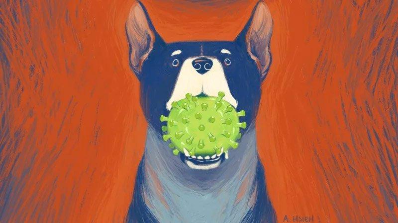 دانشمندان: ویروس کرونای جدید مالزیایی میتواند از سگ به انسان منتقل شود