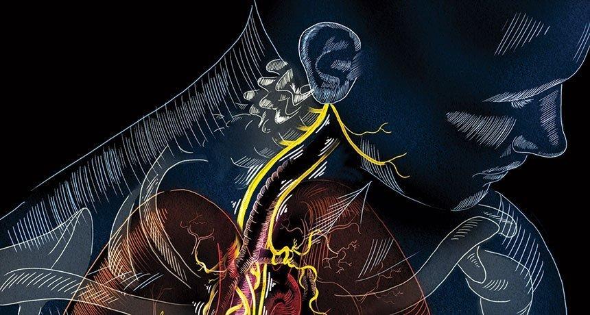 مسیر عصب واگ و شاخههای آن در ناحیه گردن