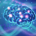 آیا برای خوابیدن حتما باید مغز داشته باشیم؟