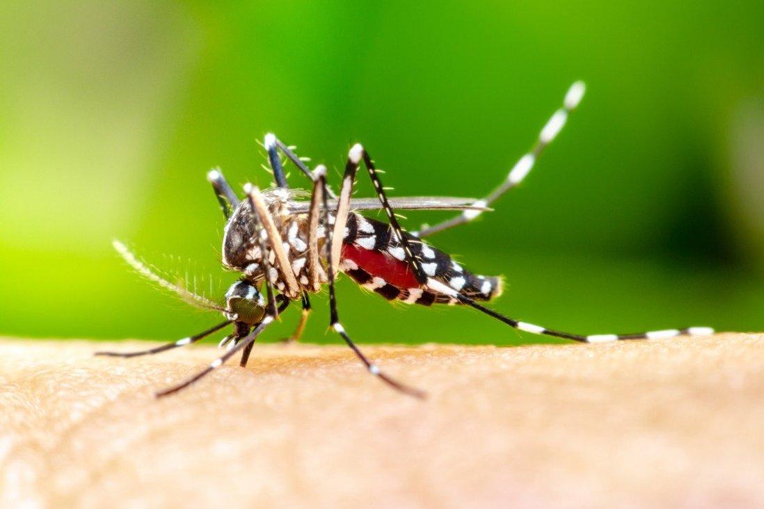 چین پس از ۷۰ سال تلاش، مالاریا را ریشهکن کرد