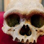 کشف گونه «مرد اژدها» در چین که میتواند داستان فرگشت انسان را بازنویسی کند