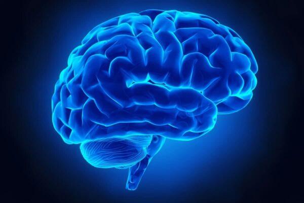 امیدی تازه برای درمان آلزایمر: اولتراسوند حافظه موشهای پیر را تقویت کرد