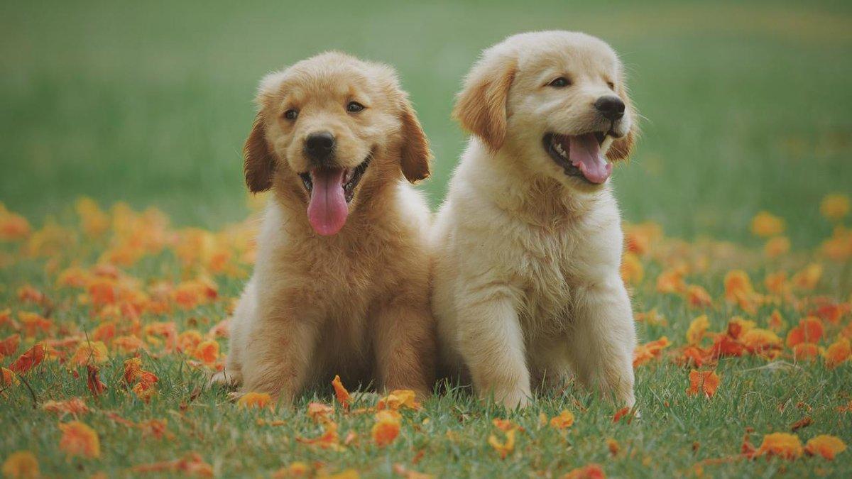مطالعه جدید: قدرت برقراری ارتباط سگها با انسان میتواند منشا ژنتیکی داشته باشد