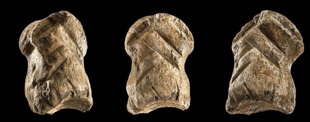 استخوان گوزن تراشخورده ۵۱ هزار ساله: نمونهای از هنر نئاندرتالها
