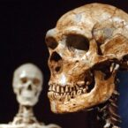 فقط ۷ درصد DNA ما منحصر به انسان مدرن است