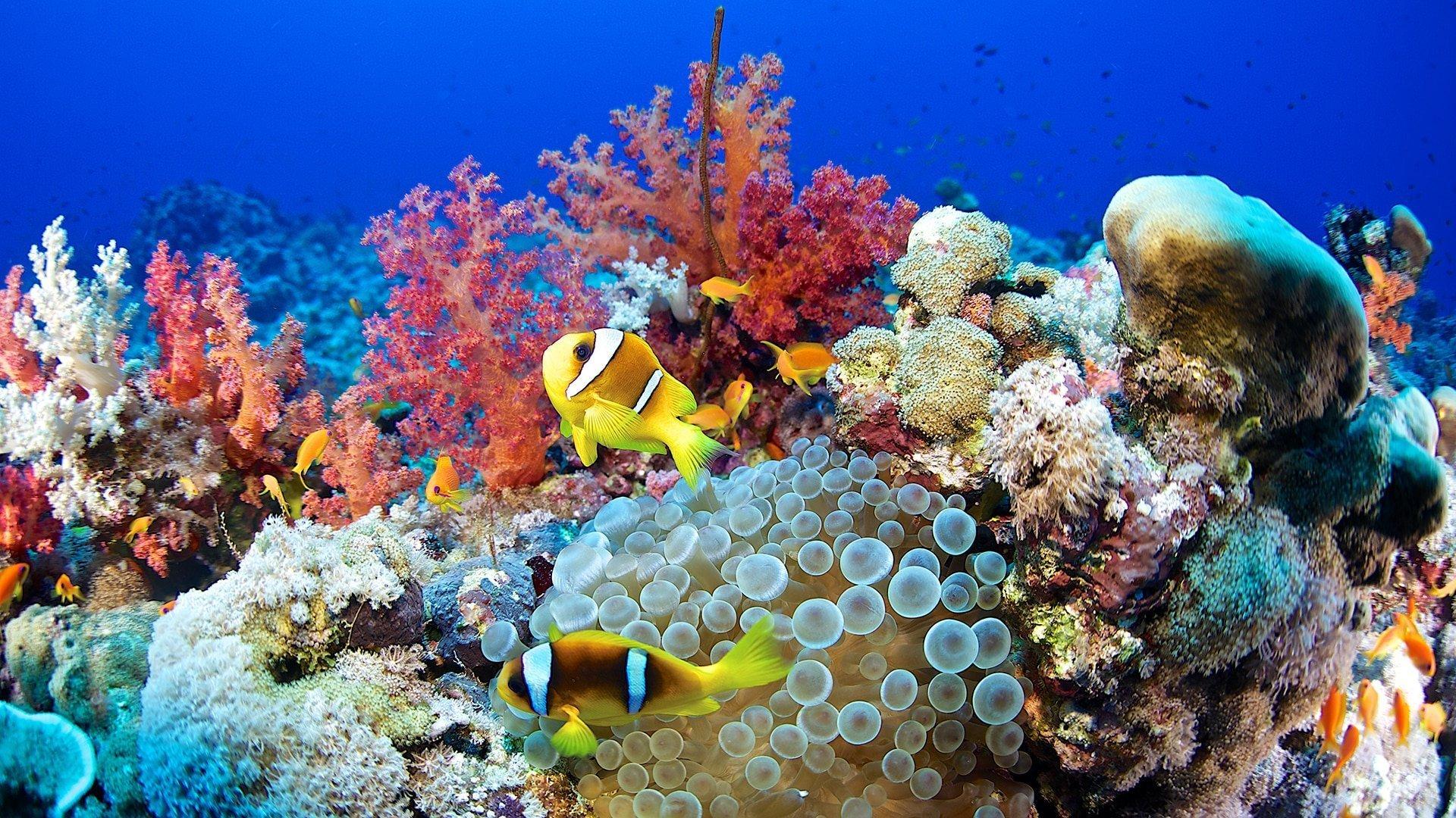 از درمان سرطان و آلزایمر تا رونق اقتصادی: چرا باید از دنیای صخرههای مرجانی محافظت کنیم؟