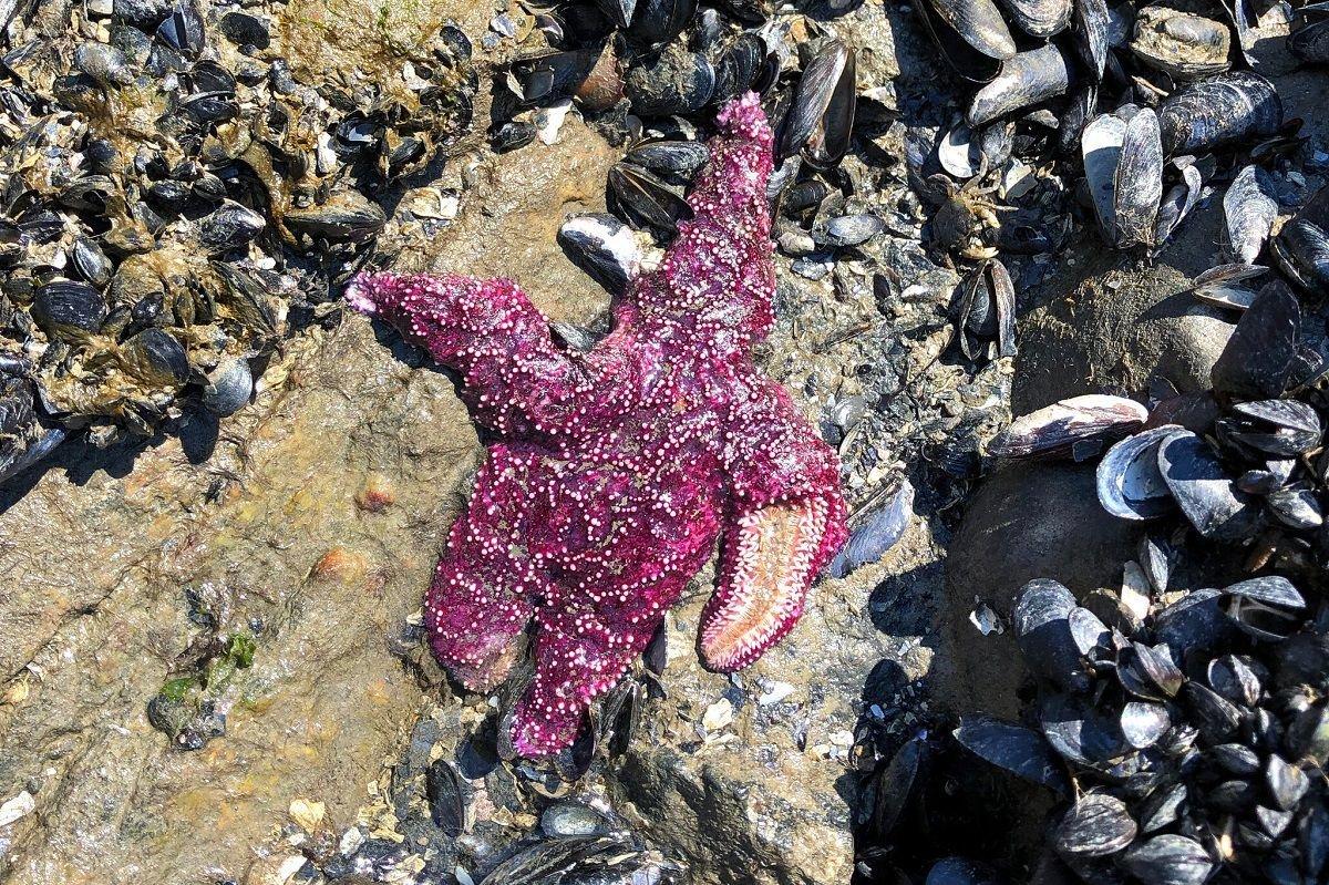 مرگ بیش از یک میلیارد جانور دریایی در پی موج گرما در آمریکای شمالی