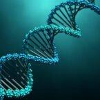 اسرار ژنوم: تنها بخش کوچکی از DNA ما منحصر به انسان است