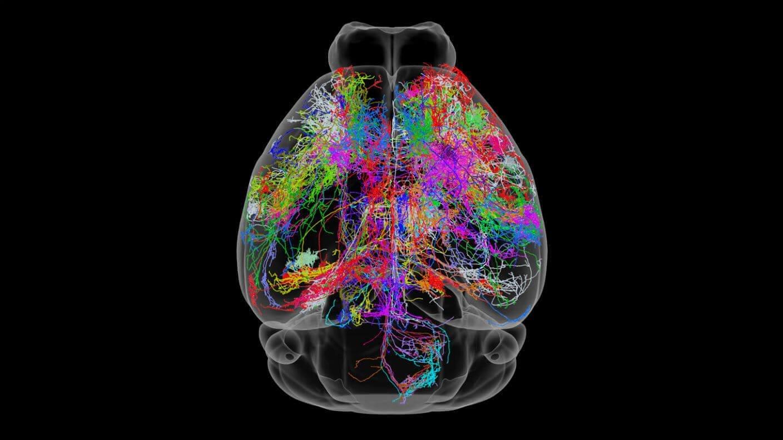 دانشمندان با باکتری روده نشانههای پیری مغز را در موشها معکوس کردند