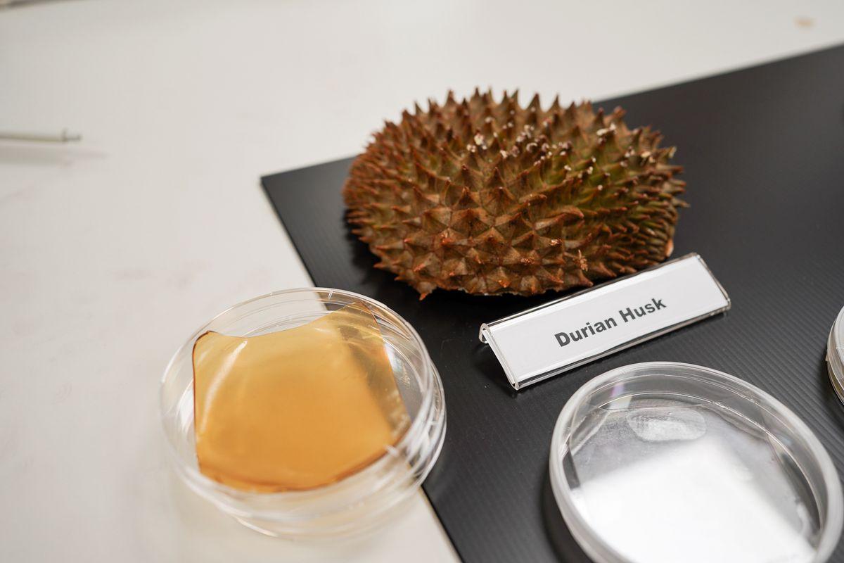 تبدیل پسماند میوه به بانداژ آنتی باکتریال توسط دانشمندان سنگاپوری