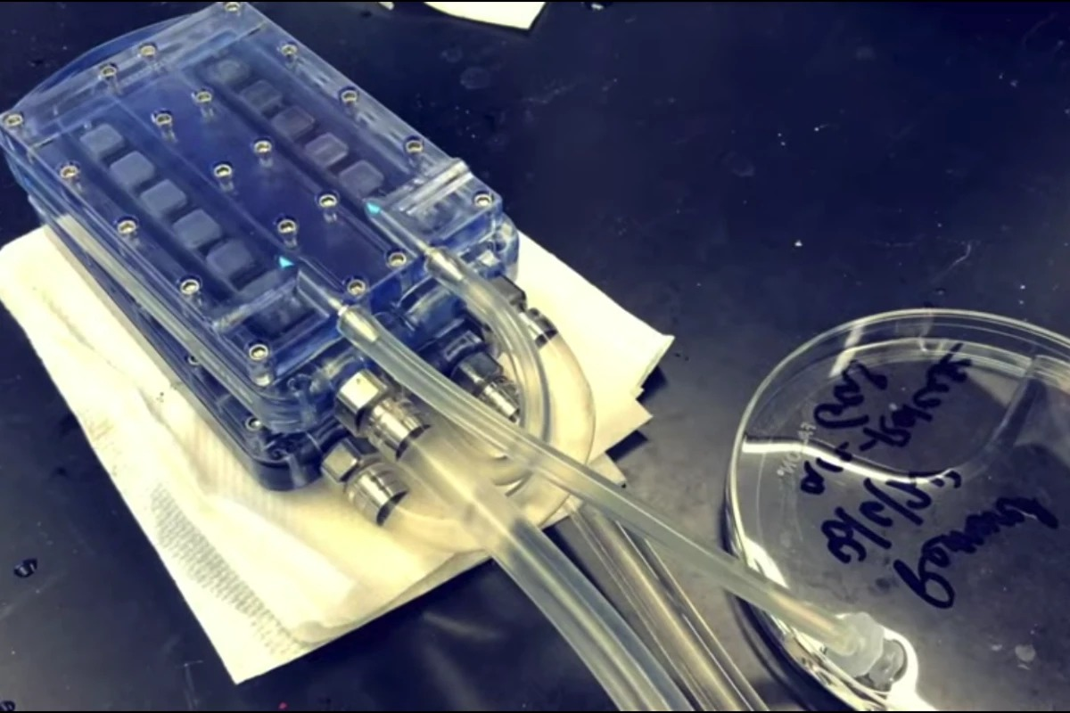توسعه کلیه مصنوعی قابل کاشت در بدن که نیاز به دیالیز را از بین میبرد