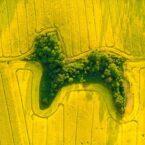 هنر عکاسی هوایی: برندگان مسابقه عکاسی با پهپاد ۲۰۲۱ مشخص شدند