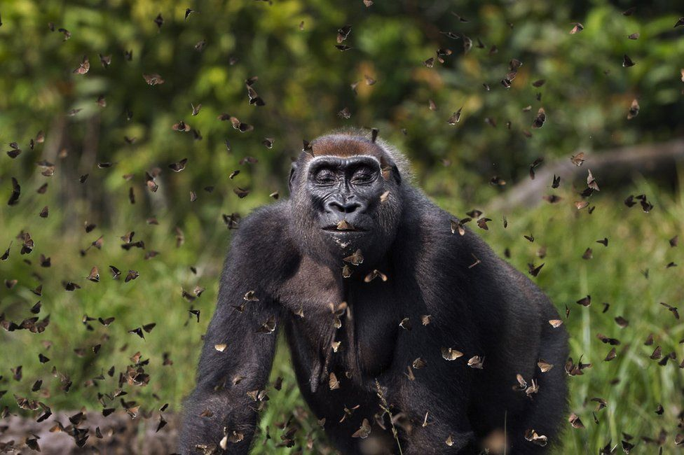 برندگان مسابقه عکاسی حفاظت از طبیعت ۲۰۲۱ اعلام شدند