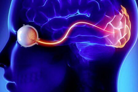 فناوری جدید ایمپلنت مغزی امکان دیدن تصاویر را برای افراد نابینا فراهم میکند